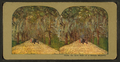 Under the live oaks of a Florida Highway, from Robert N. Dennis collection of stereoscopic views 2.png