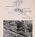 Vanilla culture in Puerto Rico (1948) (20576321731).jpg