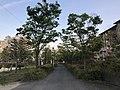View near Aeon Mall Kashiihama.jpg