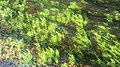 Vilalba rio Madalena 12.jpg