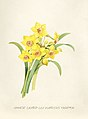 Vintage Flower illustration by Pierre-Joseph Redouté, digitally enhanced by rawpixel 05.jpg