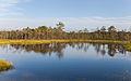 Viru Bog, Parque Nacional Lahemaa, Estonia, 2012-08-12, DD 54.JPG