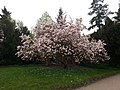 Vogelgesang-Park Magdeburg.jpg