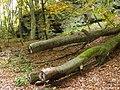 Wald am Langenberg - geo.hlipp.de - 14743.jpg
