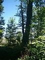Wald auf der Herreninsel - geo.hlipp.de - 11156.jpg