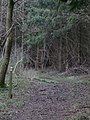 Walking through Heth woods - geograph.org.uk - 310850.jpg