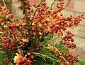 Wasp on Mahonia blossom (29762005582).jpg