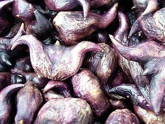 Water caltrop - Boiled water caltrop (Trapa bicornis) seeds