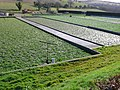 Water Cress Beds - geograph.org.uk - 723261.jpg