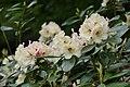 White flowers in Germany (9292010599).jpg