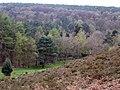 Whitmoor Vale - geograph.org.uk - 3838.jpg
