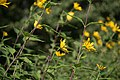 Wild flowers in a forest near Olgino 2020-09-13-2.jpg