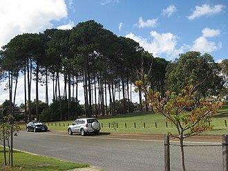 Winthrop, Western Australia - Hill Park in Winthrop