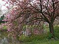 Wiosenne widoki - panoramio (1).jpg
