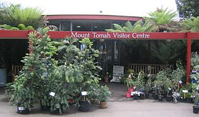 Wollemia nobilis outside mount tomah visitors centre.jpg