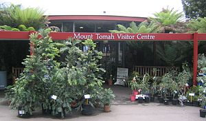 Blue Mountains Botanic Garden - Image: Wollemia nobilis outside mount tomah visitors centre