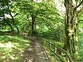 Woodland walk - geograph.org.uk - 1421015.jpg