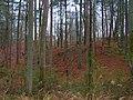Woodpeckers' hangout - panoramio.jpg