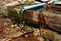 Wysięk, źródełko przy Czarnej Wisełce 30.04.2012 p2.jpg