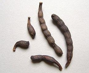 poivre de guinee proprietes