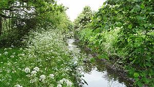 Ten Acre Wood - Yeading Brook in Ten Acre Wood