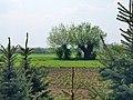 Zalipie museum - backyard and ploughland of the Felicja Curyłowa's farm.JPG