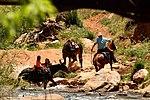 Zion National Park - Utah (15011888774).jpg