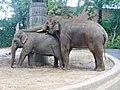 Zoo Berlin - Elefanten - geo.hlipp.de - 40687.jpg