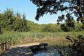 Zwin Natuurpark R09.jpg