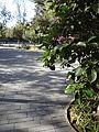 (( Parque La Carolina in Quito.JPG