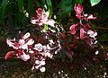 (1)Wendy Whiteleys Garden 017.jpg