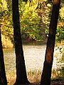 (PL) Polska - Warmia - Ścieżka nad jeziorem Długim w Lesie Miejskim w Olsztynie - Path on the Long Lake in the City Forest in Olsztyn (9.X.2012) - panoramio (11).jpg
