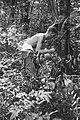 , Borneo, Bestanddeelnr 1722-1-2.jpg