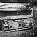 Čebelnjak, pri Zorin, Dolnji Križ 1957.jpg