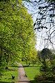 Ścieżka w ogrodzie włoskim w wiosennej odsłonie..JPG