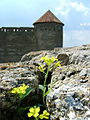 Акерманська фортеця2!.jpg