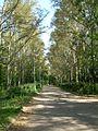 Аллея в парке им.Ю.Гагарина - panoramio.jpg