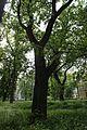 Байкова гора IMG 8044.jpg