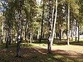Берёзовая роща по улице Беленогова, Кострома 02.jpg