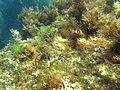 """Камни около """"Ассоли"""". Подводное фото. Симеиз. Крым. Сентябрь 2012 - panoramio.jpg"""