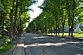 Липові алеї в Сумах.jpg