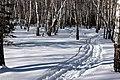 Лыжня манит.jpg