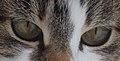Мачје очи.JPG