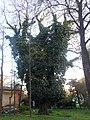 Одеса, Ботанічний сад, Французький бульвар 04-2018 22.jpg
