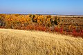 Пойма реки Илек в конце сентября - panoramio.jpg