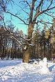 Пуща-Водицький лісопарк 23.JPG