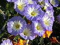 Растения в Седово 227.JPG