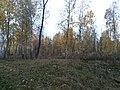Севастопольский парк осень 2 2.jpg