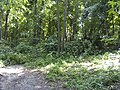 Украина, Киев - Голосеевский лес 191.jpg