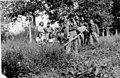 אימוני הפלמח לבני הנוער החלוצי באירופה - מגנטה- חוות הכשרה עש אליהו גולומב --151263.jpg